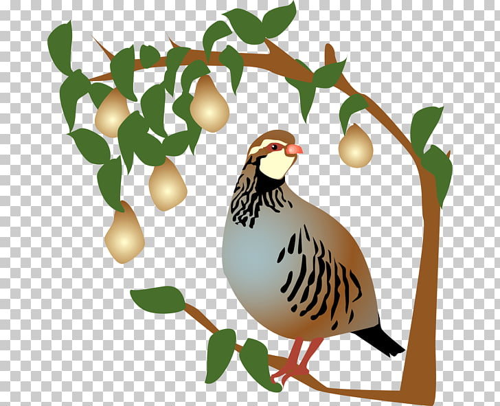 Partridge The Twelve Days of Christmas Pear , pear PNG.