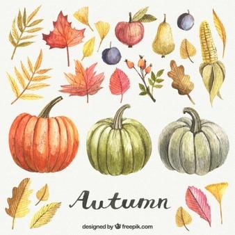 Autumn pumpkins illustration Vector.