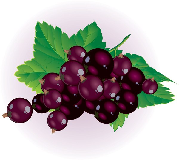 Free clipart berries 5 » Clipart Portal.