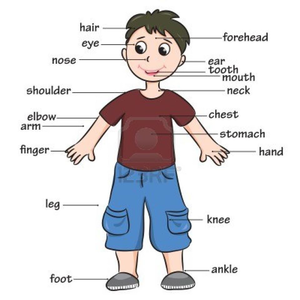 Preschool Clipart Body Parts.