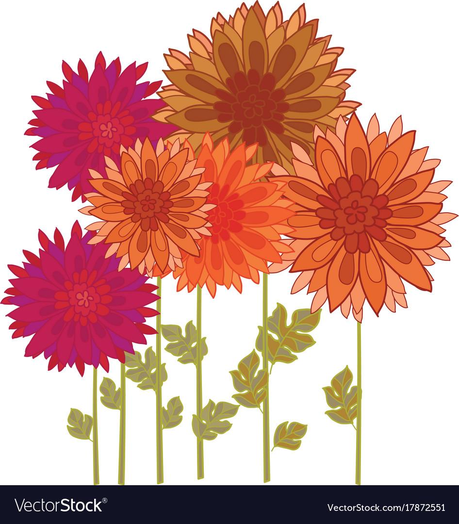 Chrysanthemum flower element.