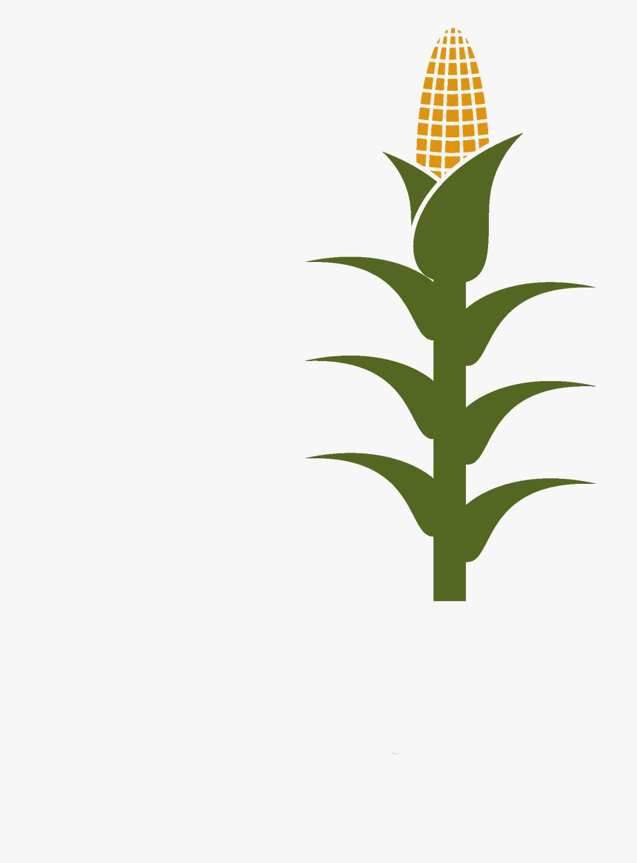 Corn Stalk Clipart , Transparent Cartoon, Free Cliparts.