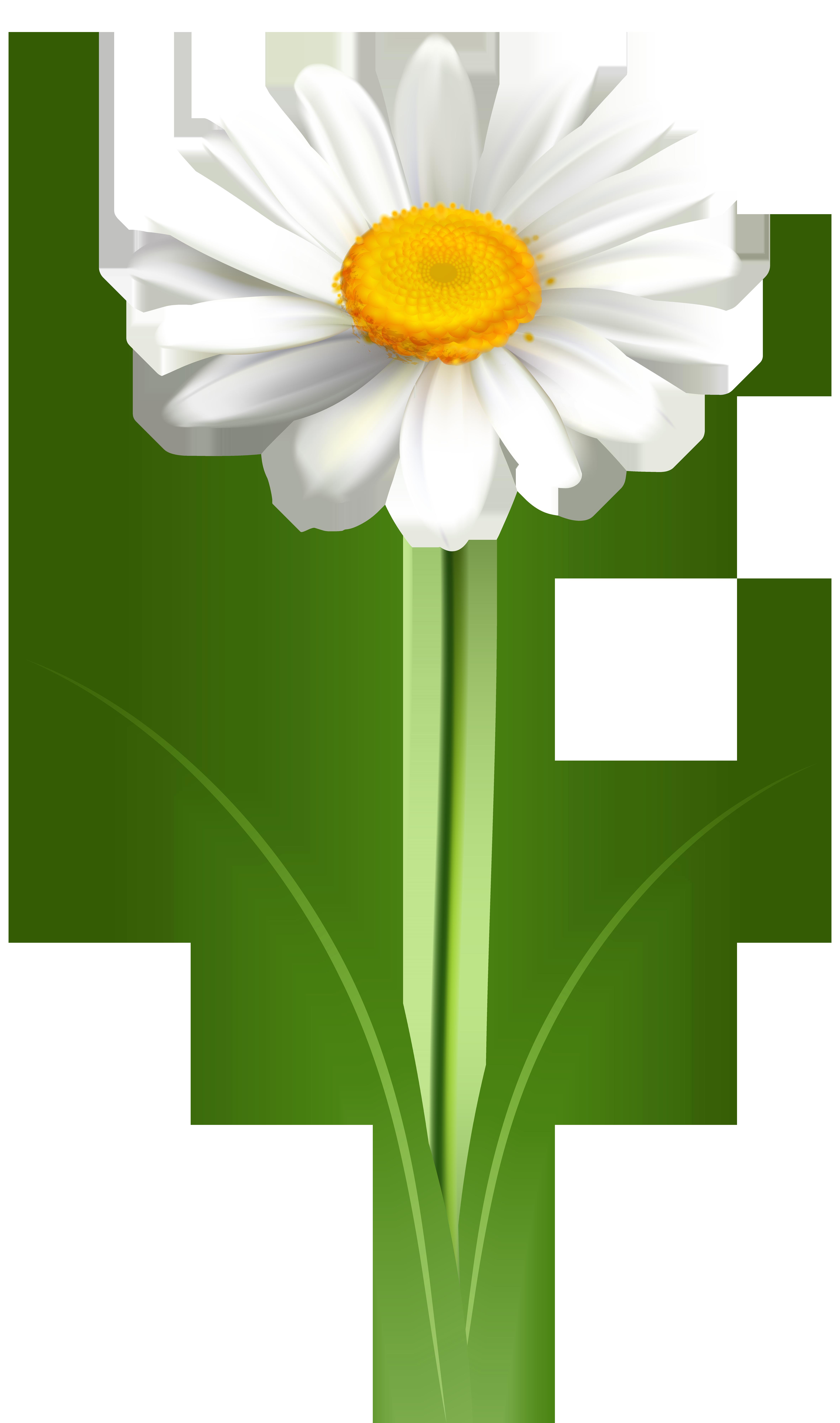 Daisy Flower Transparent PNG Clip Art Image.