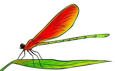 50 FREE Dragonfly Clip Art Drawings and Colorful Images.