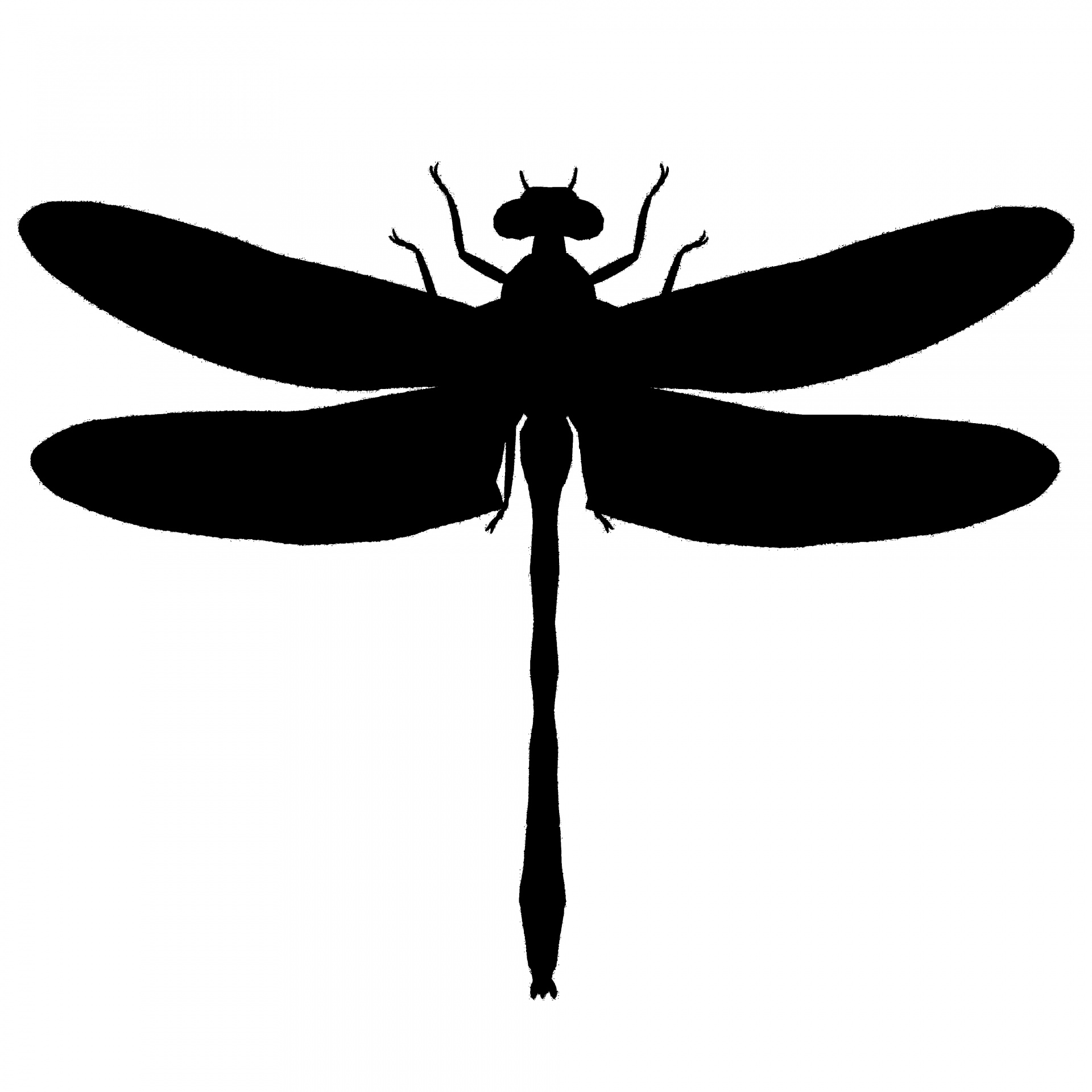 Silhouette Of A Dragonfly.