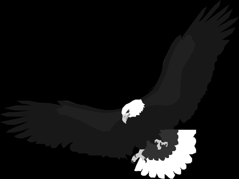 Soaring Eagle Drawing.