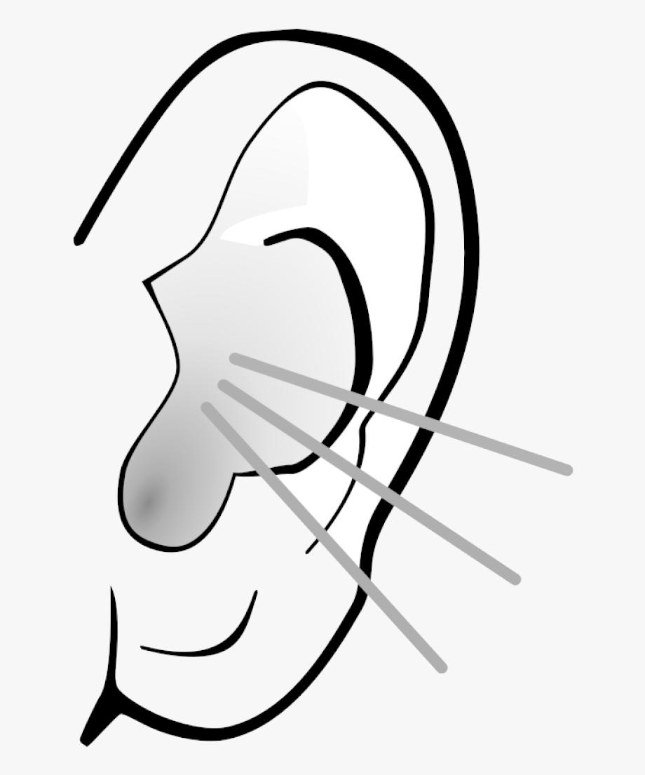 Ear Clipart Clip Art Free Panda Images Classroom Transparent.