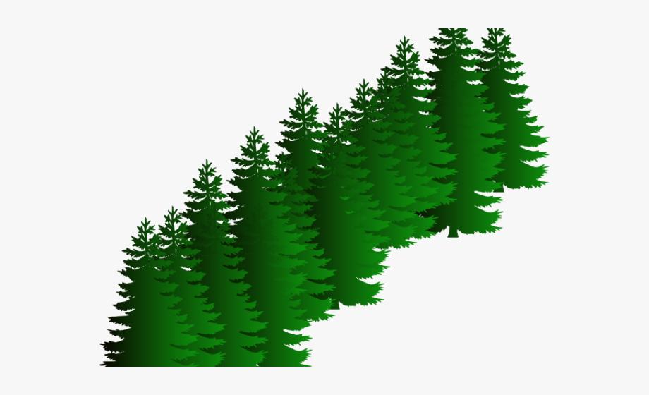 Fir Clipart Evergreen Tree.