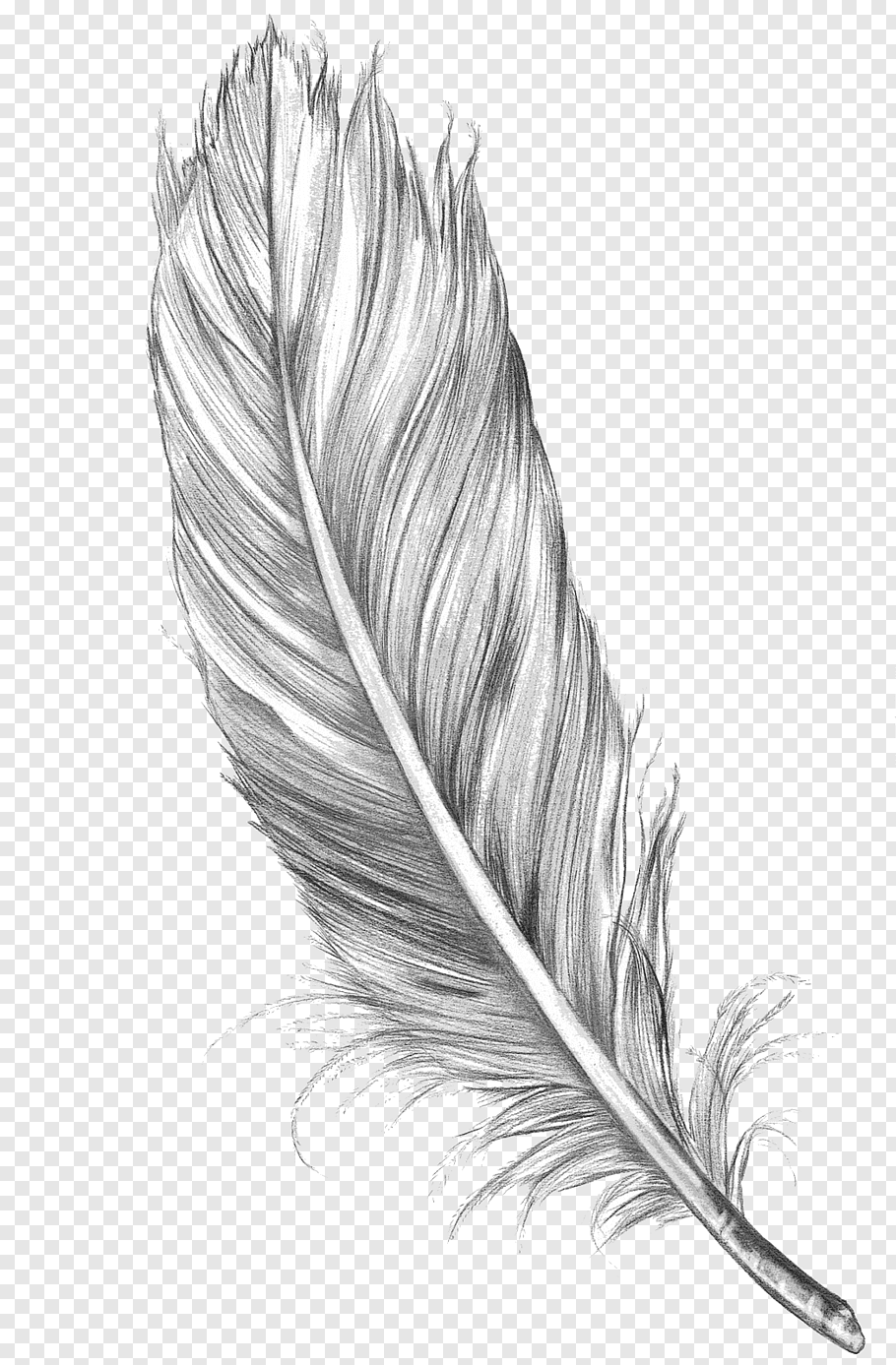 Gray feather sketch with black background, Drawing Feather.