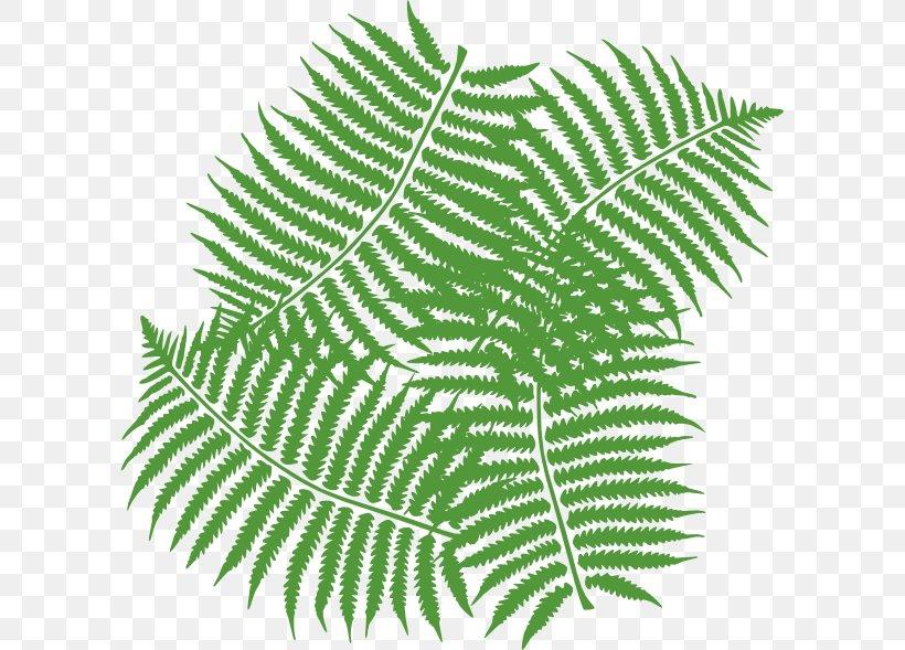 Fern Leaf Clip Art, PNG, 600x589px, Fern, Burknar, Drawing.