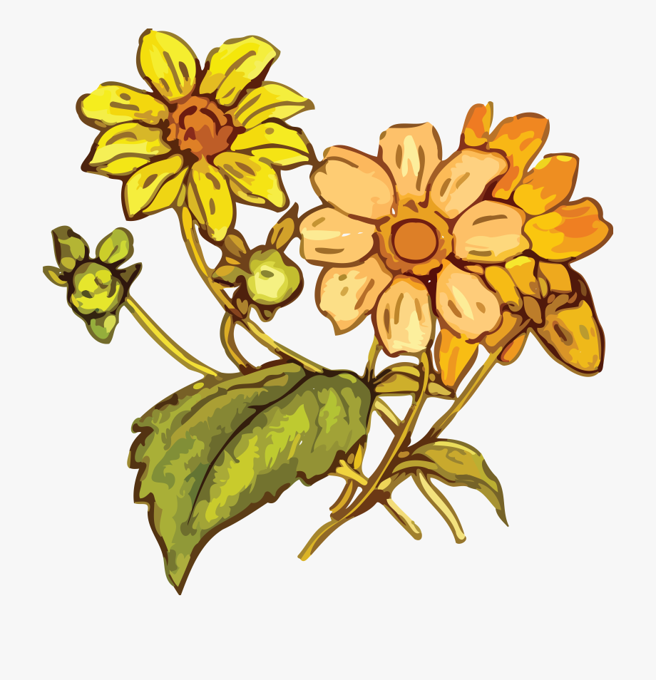 Free Clipart Of A Flowering Plant.