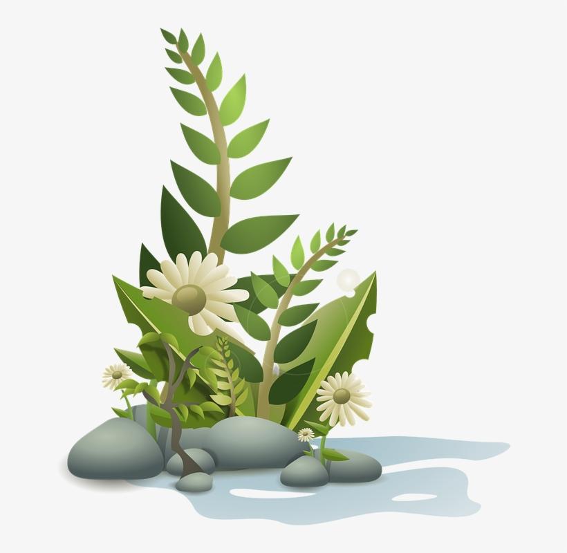 Plants, Flower, Flowers, Cartoon, Free, Plant, Tropical.