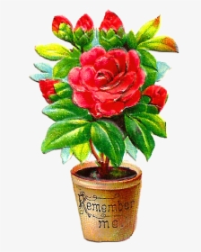 Flower Pot PNG Images, Free Transparent Flower Pot Download.