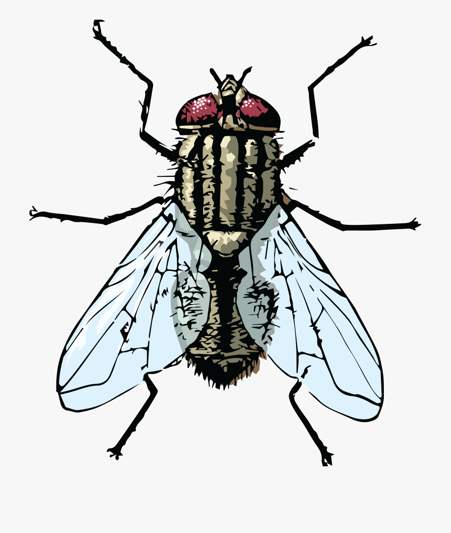 Free Clipart Of A House Fly.