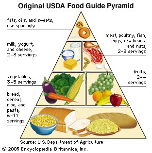Clip Art Food Pyramid.