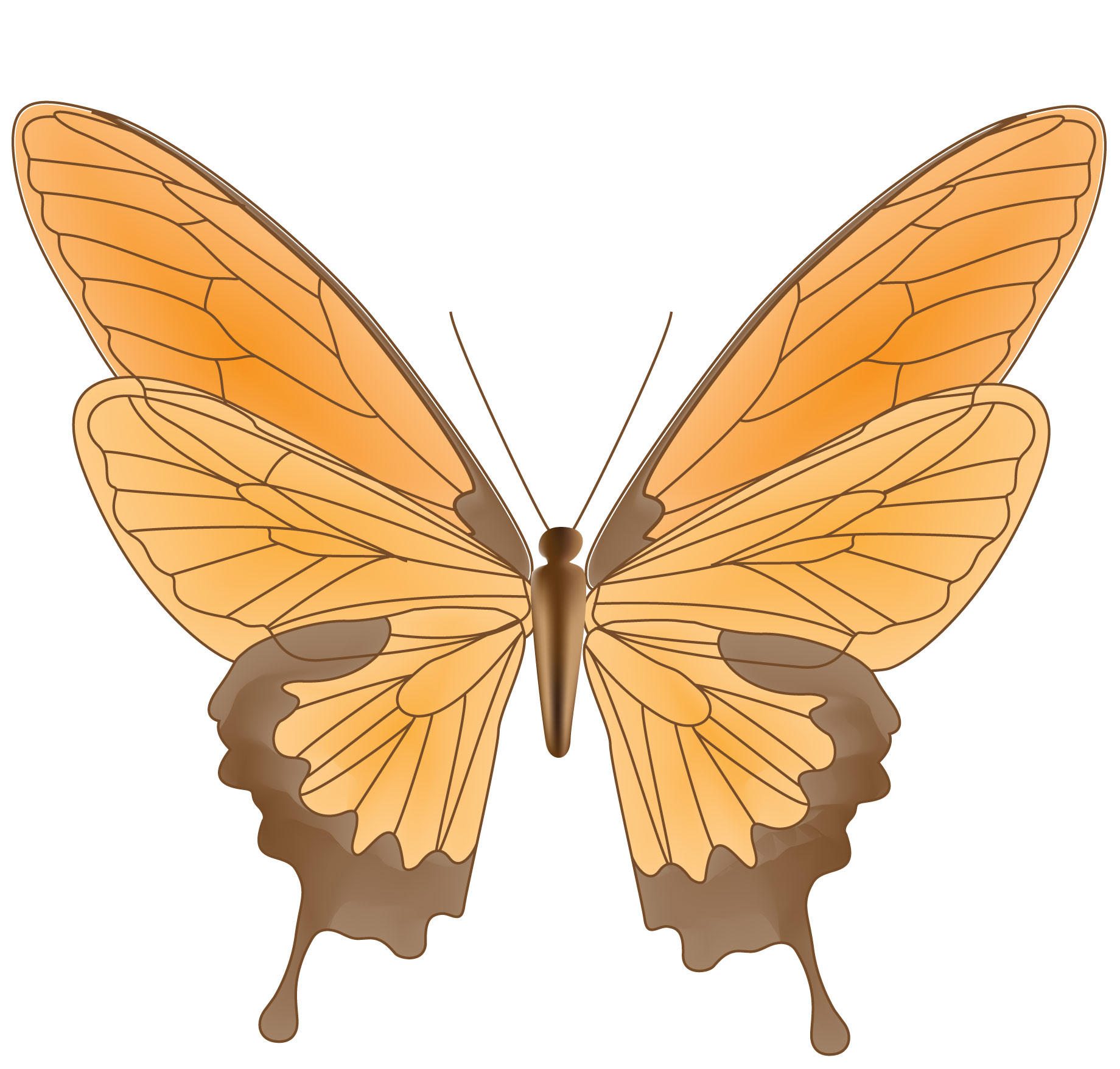 Butterfly Graphic.