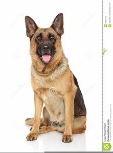 Free Clipart German Shepherd Dog.