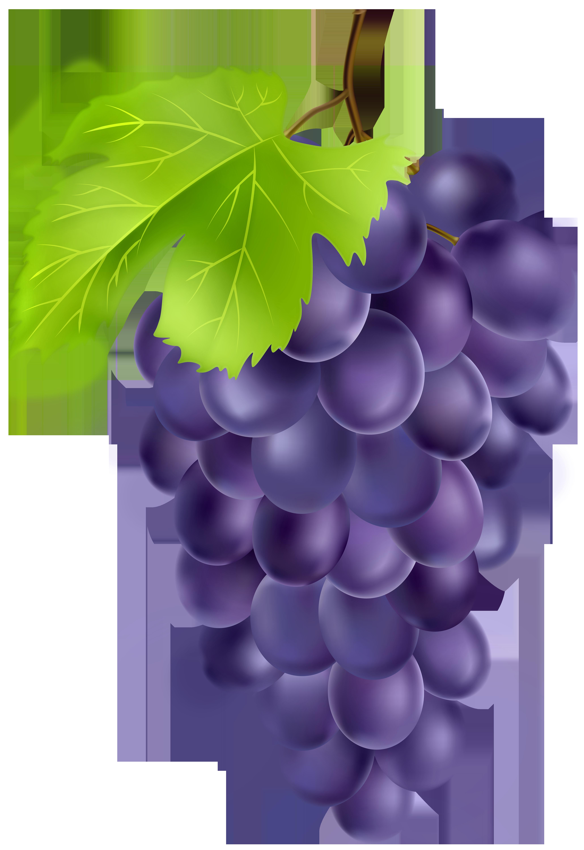 Black Grapes PNG Clipart.