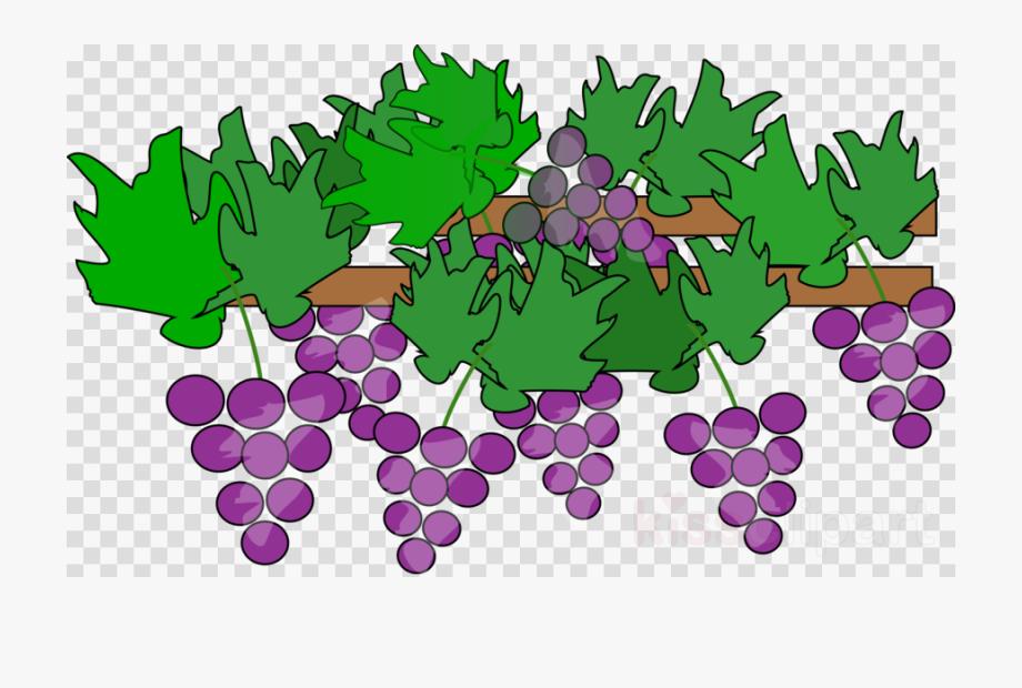 Grape Vines Clipart.