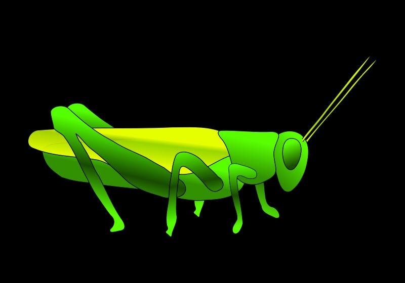 Free Clipart: Grasshopper.