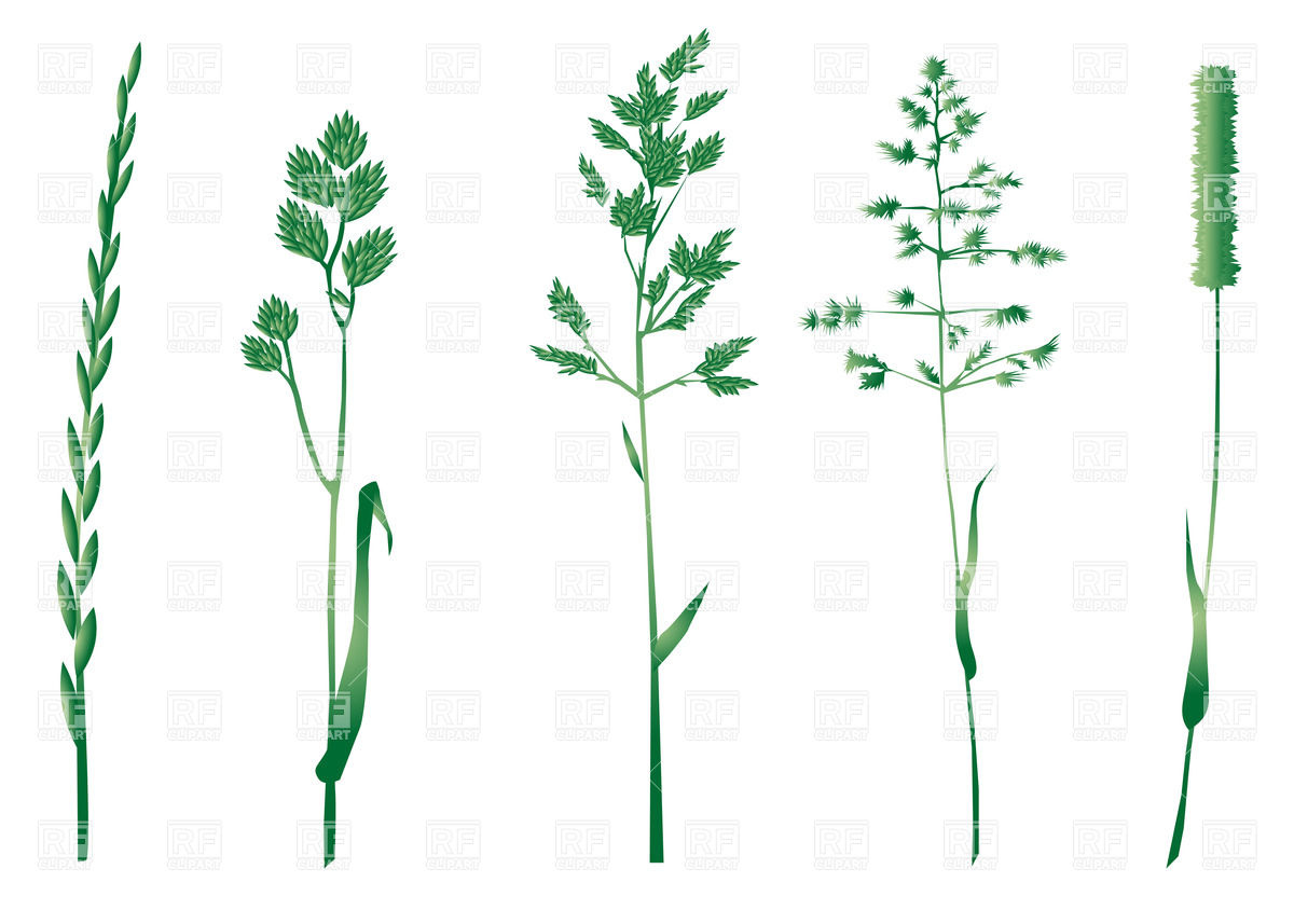 Free Clipart Borders Green Herbs.