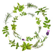Herbs Stock Illustration Images. 9,442 herbs illustrations.