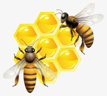 Free Honey Bee Clip Art with No Background.