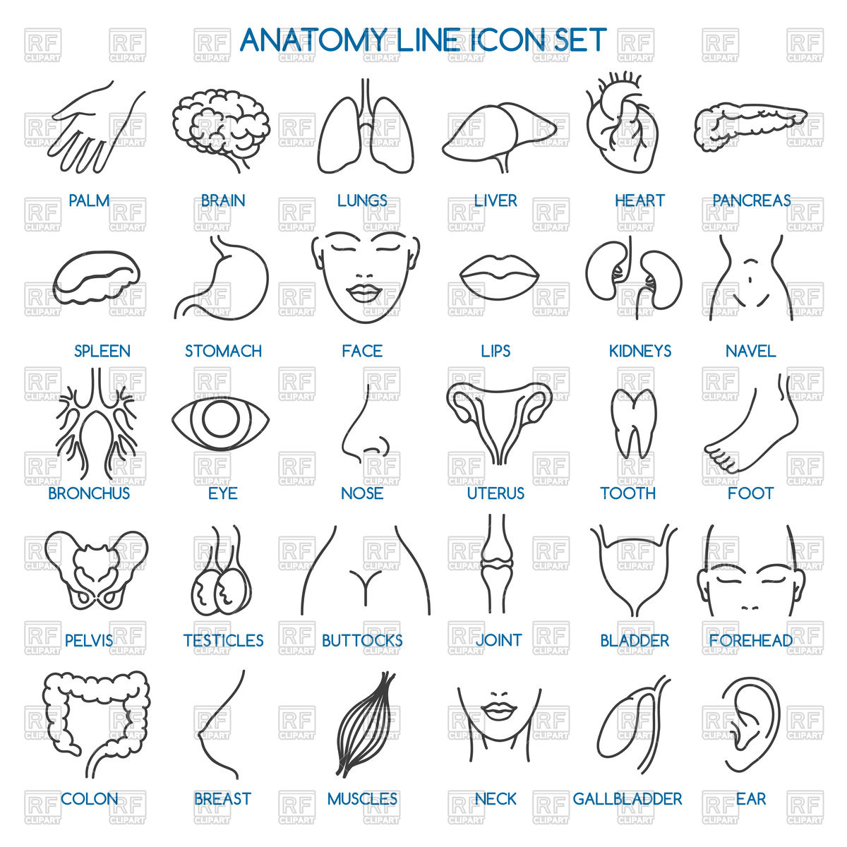 Anatomy line icons.
