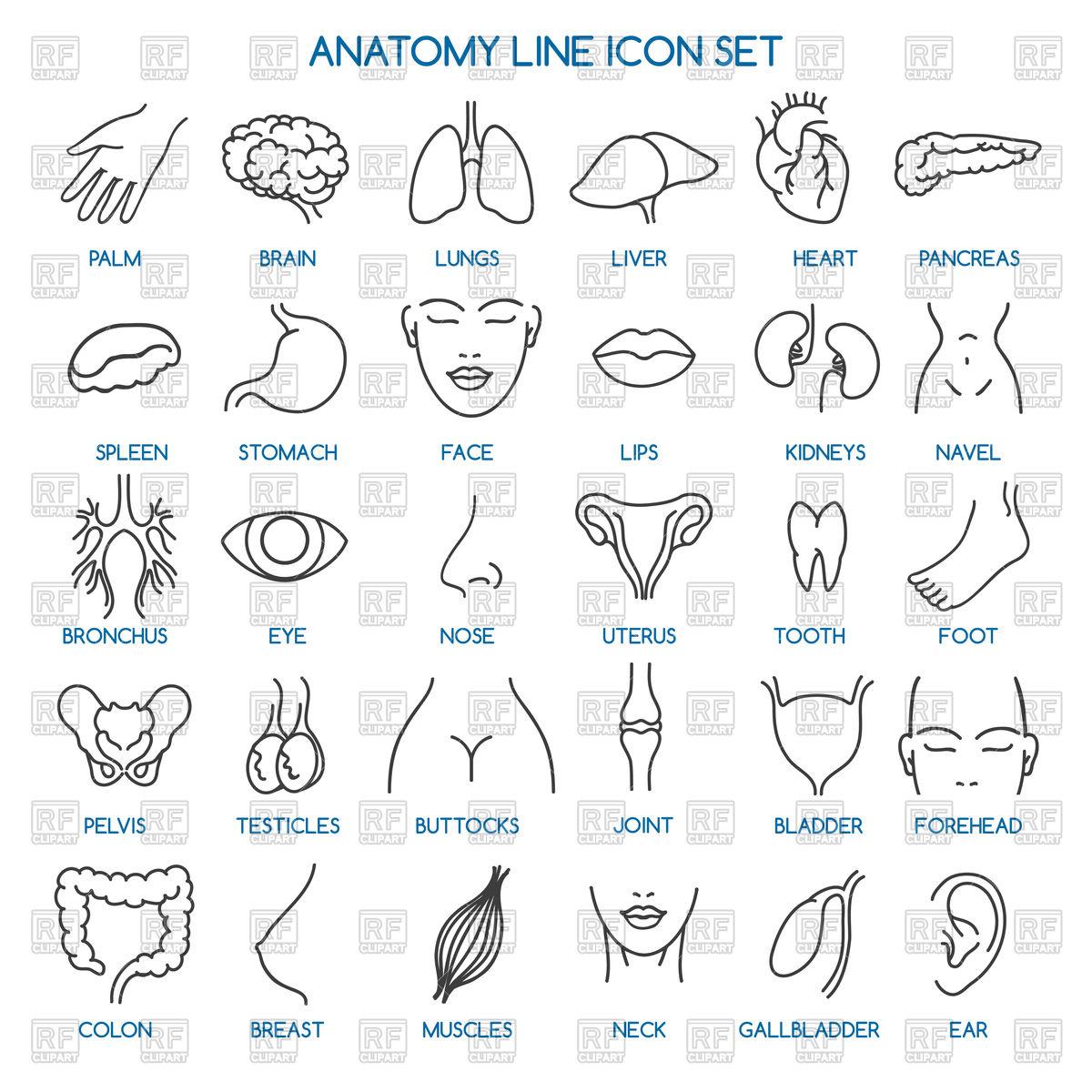 Anatomy line icons.
