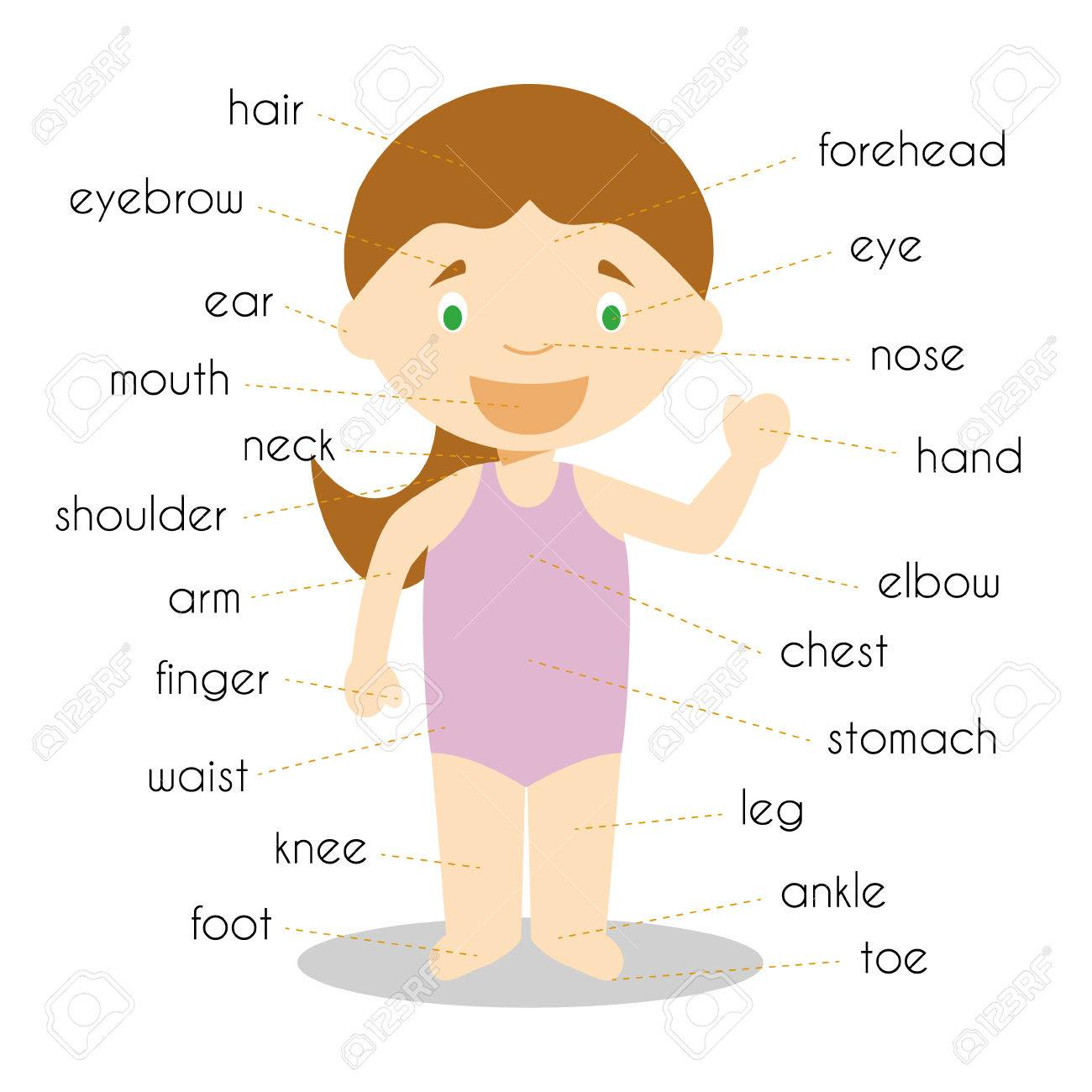 Human Body Parts Vocabulary Vector Illustration Royalty Free.