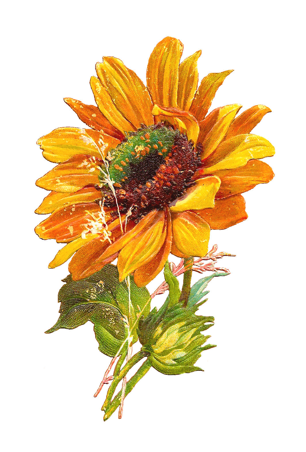 Free Clipart Flowers Sunflowers.