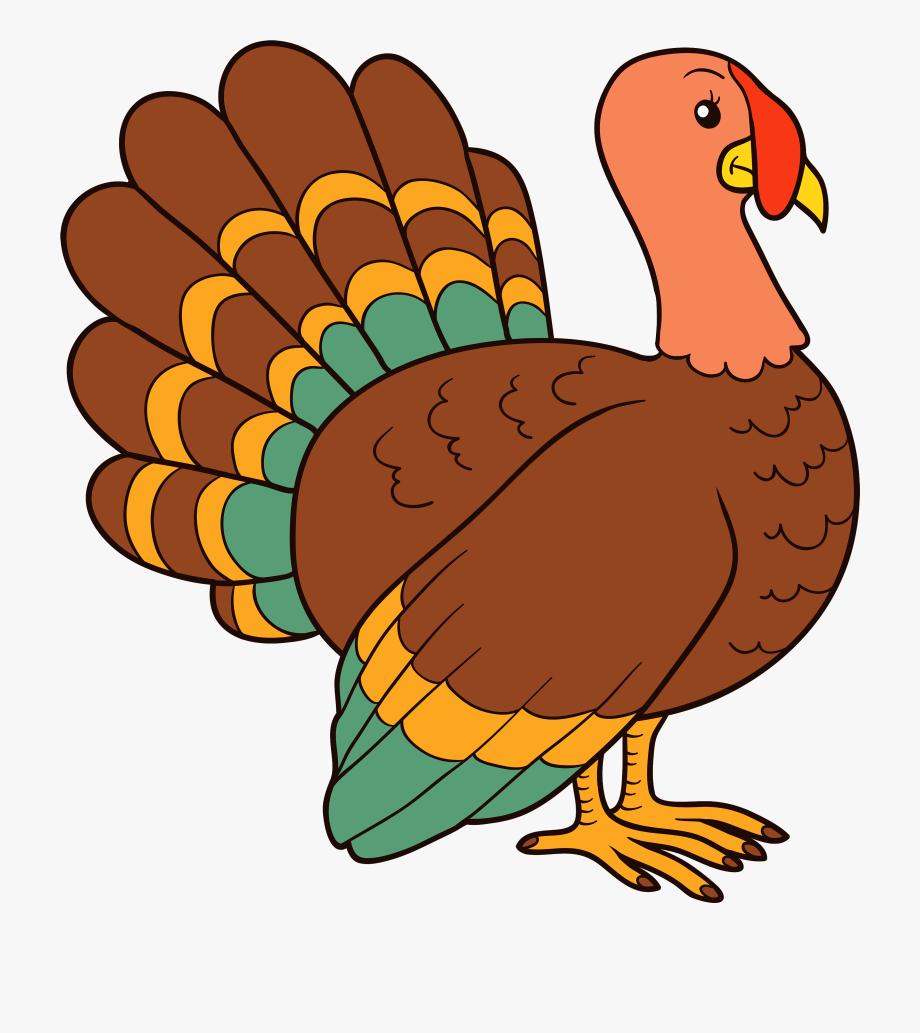 Clipart Turkey Biezumd.