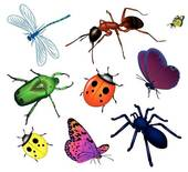 Clip Art of Set of various insects k6750006.