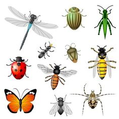All Insects clipart.