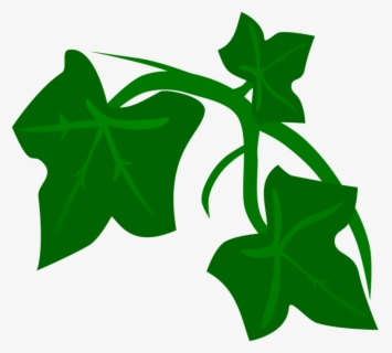 Free Ivy Clip Art with No Background.