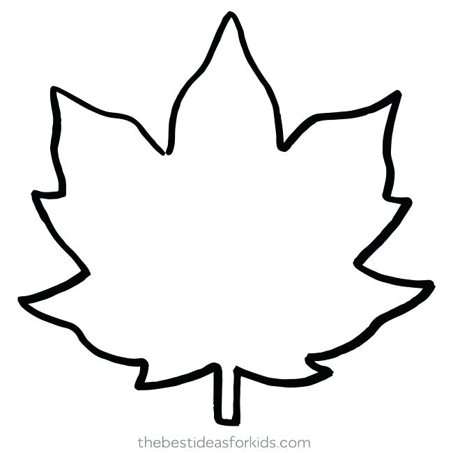 Maple Leaf Drawing Template.
