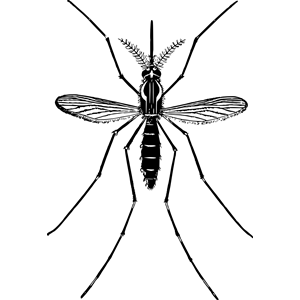 Mosquito 2 clipart, cliparts of Mosquito 2 free download.