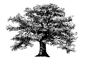 Oak tree free trees clipart free clipart graphics images and.