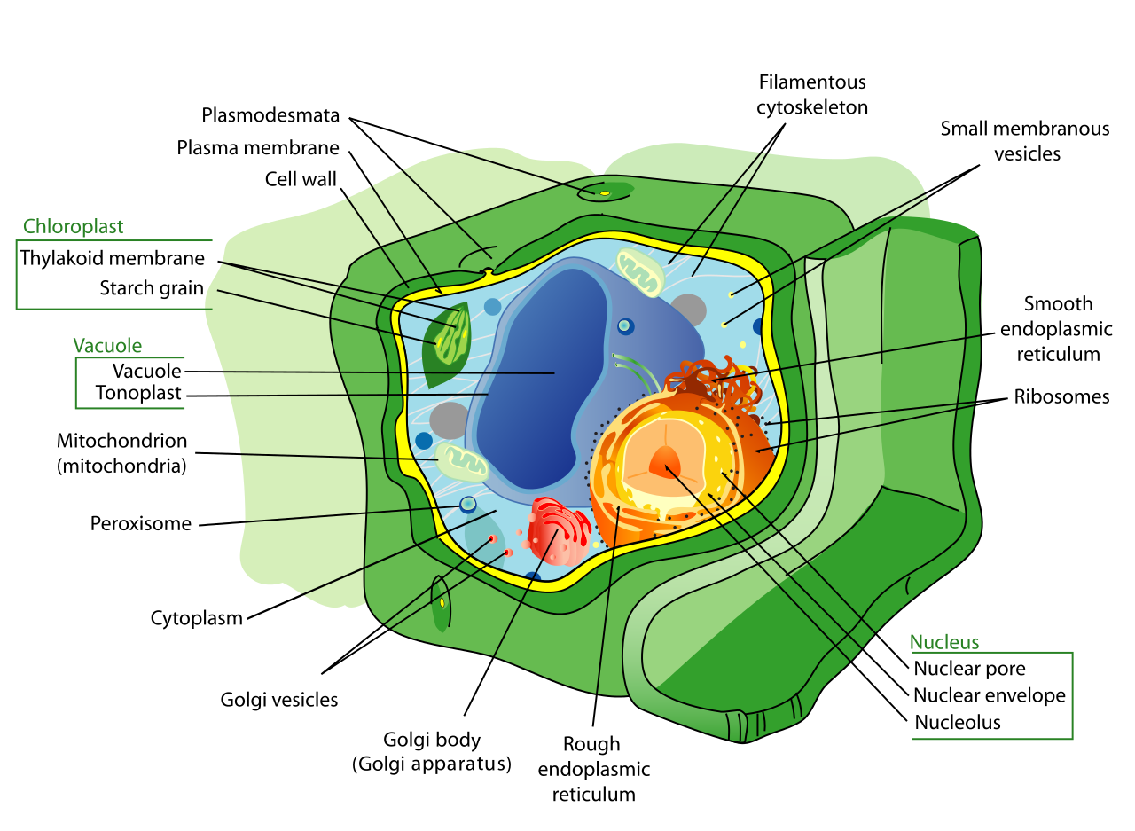 Cell (biology).