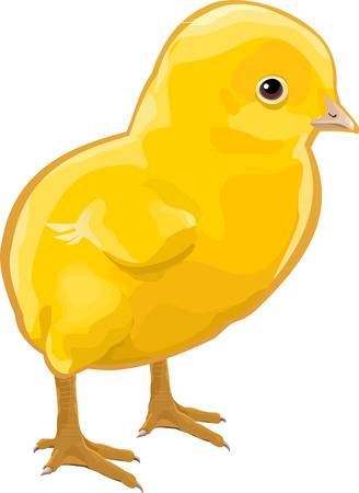 373 Baby Chick free clipart.