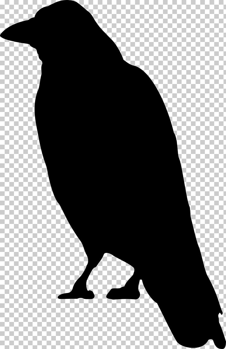 Crows , flock of birds PNG clipart.