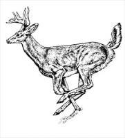 Free Deers Clipart.