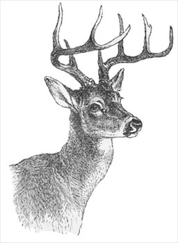 free clipart of deer #3