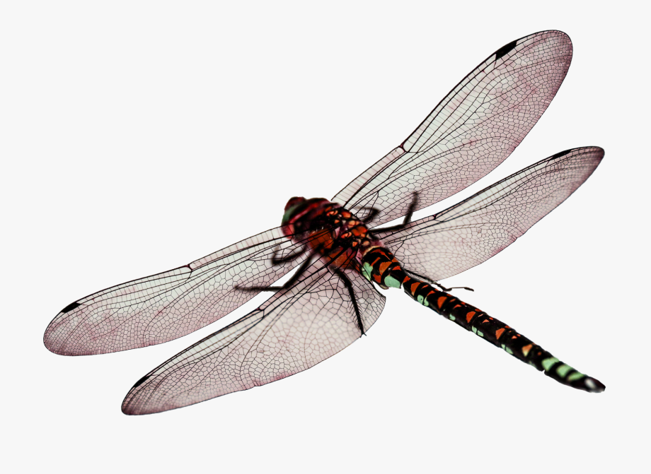 Flying Drawing Dragonfly.