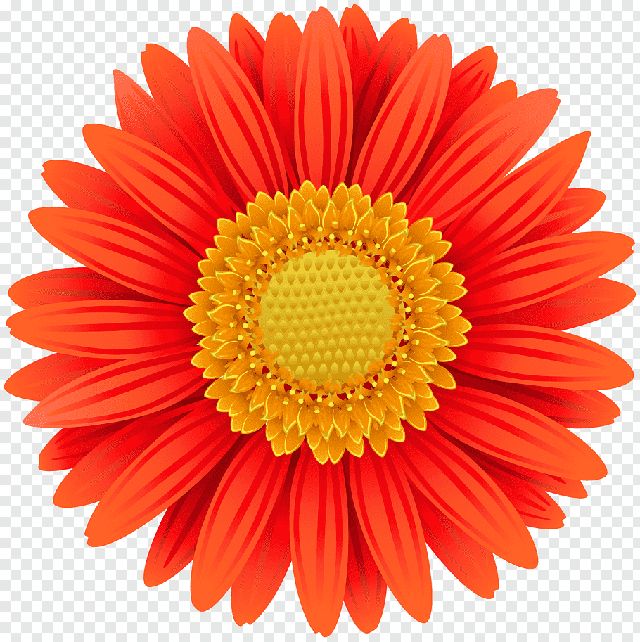 Orange gerbera daisy illustration, Quantity Discounts: An.
