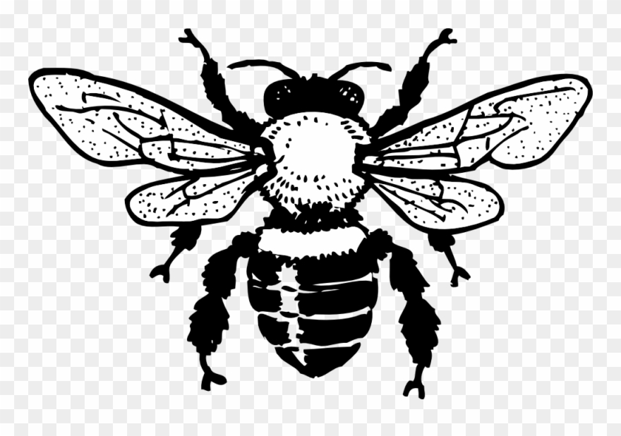 Free Honey Bee Drawing Download Free Clip Art Free.
