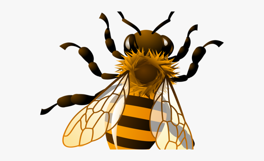 Bee Hive Clipart Honey Bee.