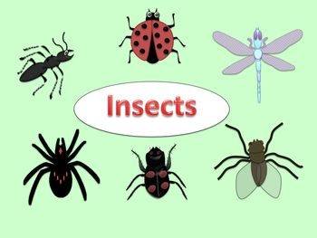 FREE INSECT CLIP ART (ant, ladybug, beetle, fly, dragonfly.