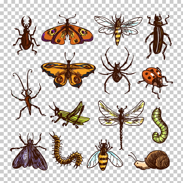 Insect Cockroach , insects PNG clipart.