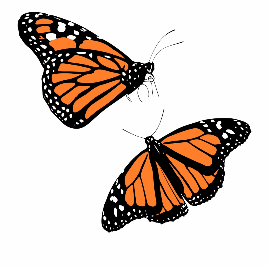Monarch Butterfly Png.